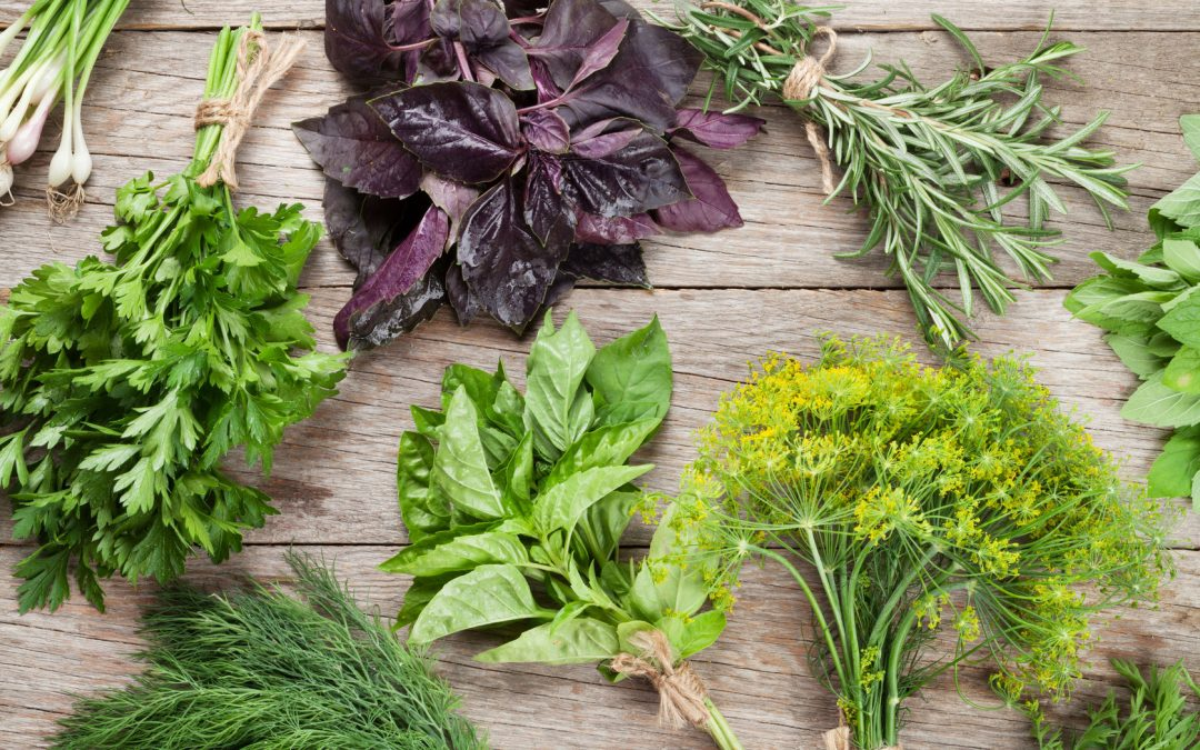 5 Herbs & Plants That Help Prevent Hair Loss