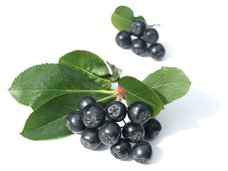 Aronia Berry: The Superfruit That Promotes Hair Growth