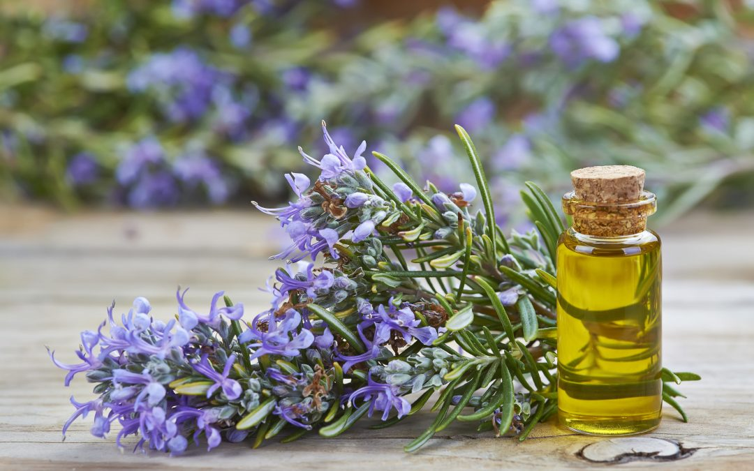 The Truth About Rosemary Oil for Hair Growth