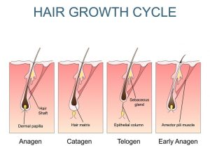 hair growth | JuveTress